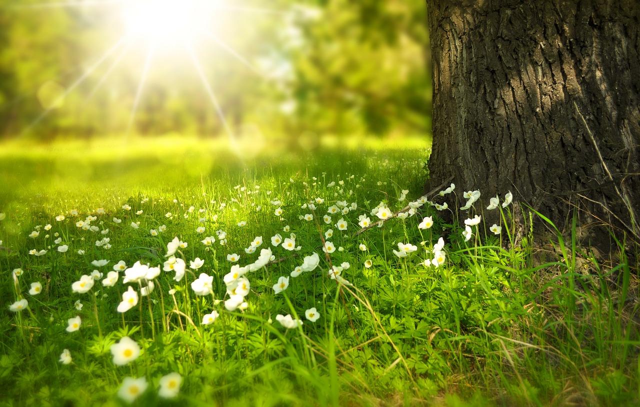 spring-276014_1280.jpg